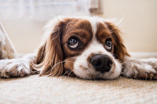 『僕のワンダフル・ライフ(A Dog's Purpose)』映画の感想、レビュー、あらすじ、ネタバレ