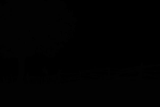 『天才スピヴェット(L'extravagant voyage du jeune et prodigieux T.S. Spivet)』映画の感想、レビュー、あらすじ、ネタバレ